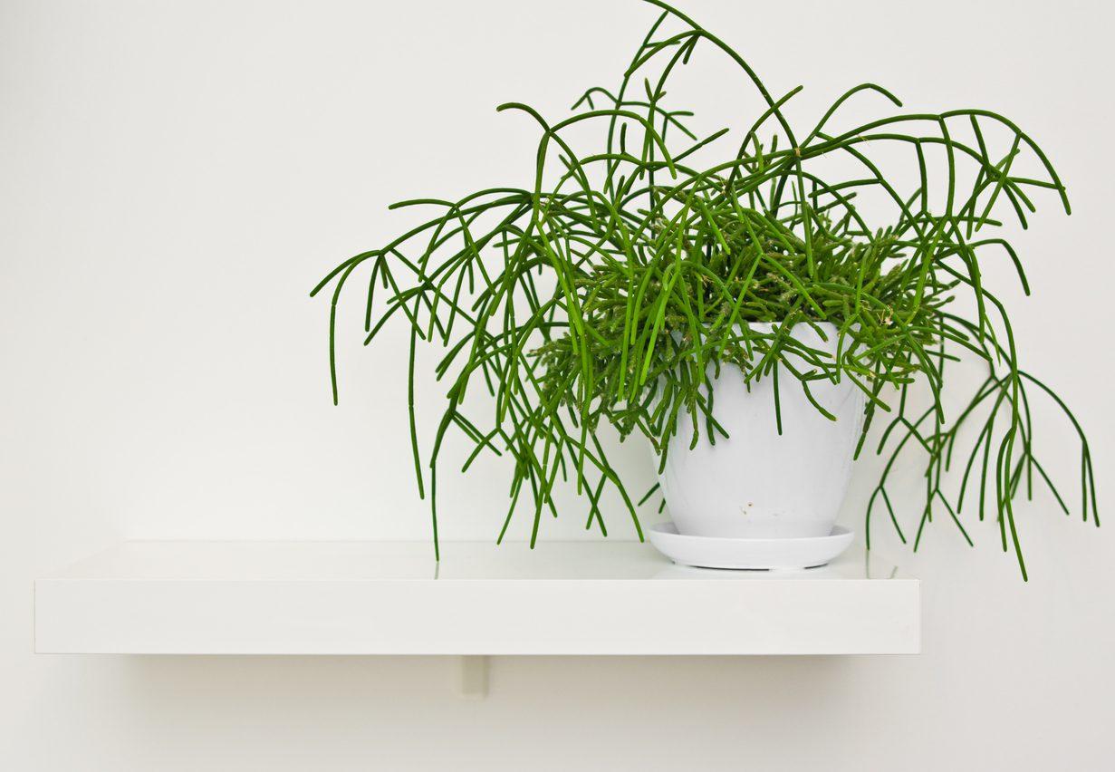 Φυτά εσωτερικού χώρου: Δες ποιο σου ταιριάζει ανάλογα το ζώδιό σου